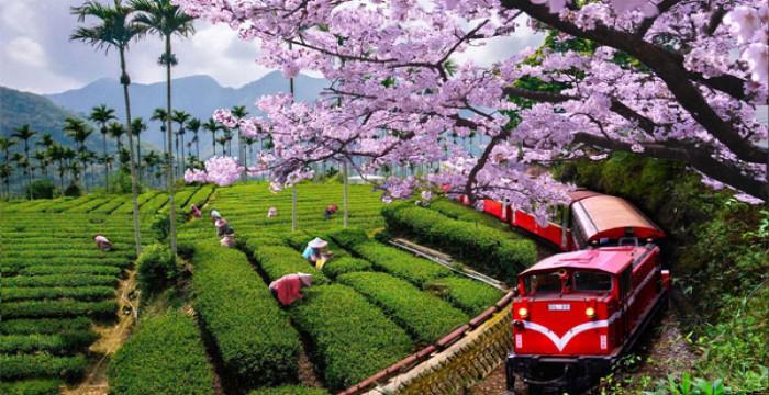5 lý do khiến bạn lựa chọn du học Đài Loan ngay lập tức