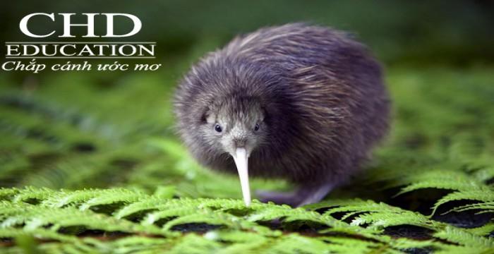 Đại Học Lincoln – Ngôi trường mơ ước của rất nhiều bạn sinh viên New Zealand
