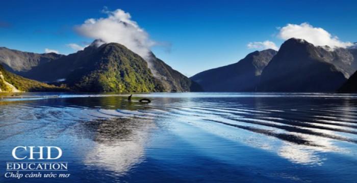 NGÀNH HỌC TIỀM NĂNG Ở NEW ZEALAND