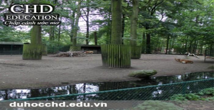 Planckendael - Vườn thú nổi tiếng của thủ đô Brussels, Bỉ